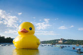 The rubber duck in summer palace — Stock Photo