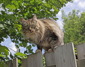 Cat Posing on a Fence — Stock Photo