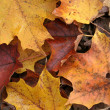 Fall Forest Floor Up Close - Stock Photo