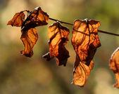 Brital Orange Leaves — Stock Photo