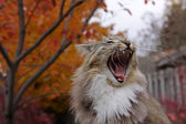 Open Mouthed Cat — Stock Photo