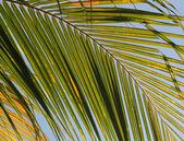 Golden Palm Leaf — Foto Stock