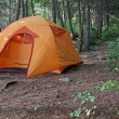 Orange Tent in a Forest — Stock Photo