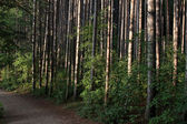 Woods Trail — Stock Photo