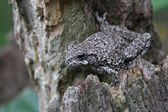 Stationed Tree Frog — Stock Photo