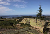 Cadillac Mountain Spruce — Stock Photo