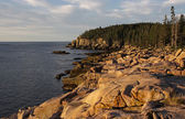 Acadia Coastline — Stock Photo