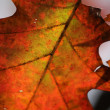 Red Oak Tree Leaf Macro — Stock Photo