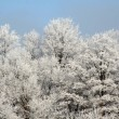 Frozen Forest — Stock Photo #7488918