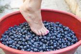 Female feet crushing grapes to make wine — Stock Photo