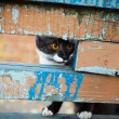 A cat on a leash playing on the wooden bench - Photo