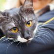 A cat on a shoulder — Stock Photo