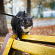 A cat on a leash playing on the wooden bench - ストック写真
