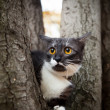 A scared cat on a tree - ストック写真