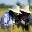 Rice farmers with mobile phone — Stock Photo #18359719