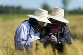 Rice farmers with mobile phone — Stock Photo