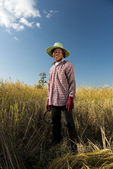 Portrait of a rice farmer — Stock Photo