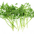Parsley — Photo #13773715