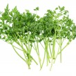 Parsley — Stock fotografie #13773715