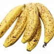 Bunch of Bananas — Stock Photo