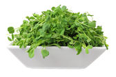 Snow Pea Sprouts — Stock Photo