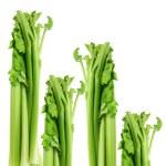 Celery — Stock Photo #14711645