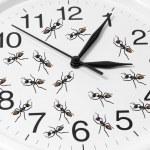 在时钟玩具蚂蚁 — 图库照片