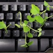 Computer Keyboard with Snow Pea Sprouts — Stock Photo