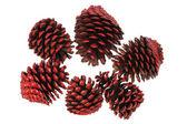 Cones de abeto — Foto Stock