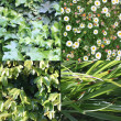 Green Shrubs — Stock Photo