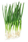 Spring Onion — Stock Photo