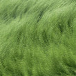 Sea grass 01 — Stock Photo