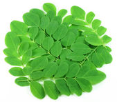 Edible moringa leaves — Stock Photo