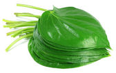 Popular edible betel leaf of Indian subcontinent — Stock Photo