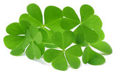 Decorative clover — Stock Photo