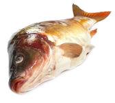Tatkini vis van Indische subcontinent — Stockfoto