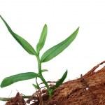 Plant — Stock Photo #24574437
