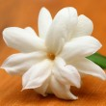 Jasmine — Stock Photo #27398821