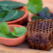 Stock Photo: Medicinal herbs with honey comb