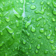 Stock Photo: Fresh green leaf with water drops.