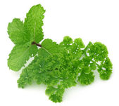 Fresh parsley with mint leaves — Stock Photo
