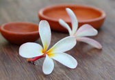 Plumeria with brown pottery — Stockfoto