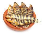 Botia dario ou rodrigues peixe sobre fundo branco — Fotografia Stock