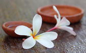 Water soaked Plumeria with brown pottery — Stock Photo