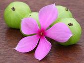 Medicinal amla and nayantara — Stock Photo
