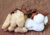 Organic cotton — Stock Photo