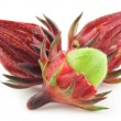Stock Photo: Roselle
