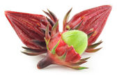 Roselle — Stock Photo