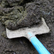 Stock Photo: Cow manure