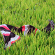 Stock Photo: Closeup of colorful scurf of farmer on paddy field